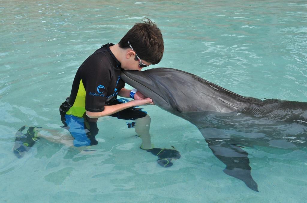 Chris Sendi - Lets kiss a dolphin